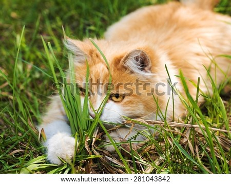 Playful red kitten in the grass - stock photo