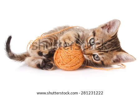 playful tabby kitten with brown ball on white background - stock photo