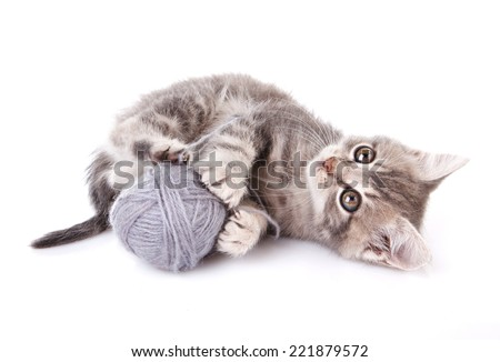 playful tabby kitten with gray ball on white background