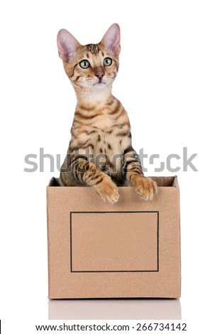 Playful tabby kitten with green eyes in a box on a white background - stock photo