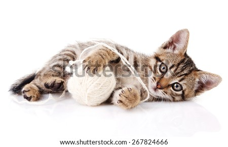 playful tabby kitten with white ball on white background - stock photo