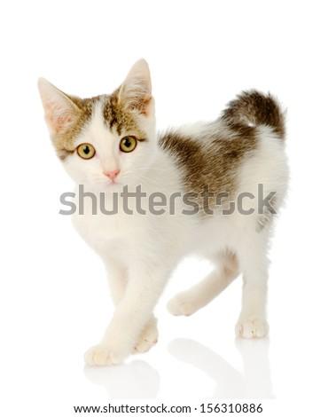Playful white kitten. isolated on white background - stock photo