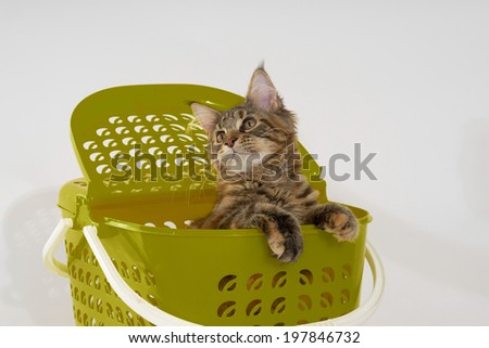 Playing Cat in Green Basket