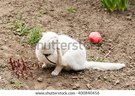 Playing cat. White cat playing with a ball in the garden, flea collars - stock photo