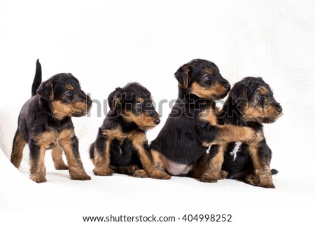 Playing cute puppies on white background - stock photo