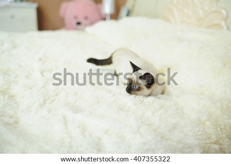 playing kitten on puffy bed cover - stock photo