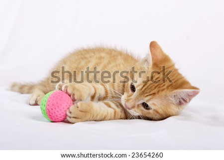 playing kitten with a ball on a white background - stock photo
