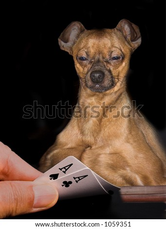 Playing poker with a dog - stock photo