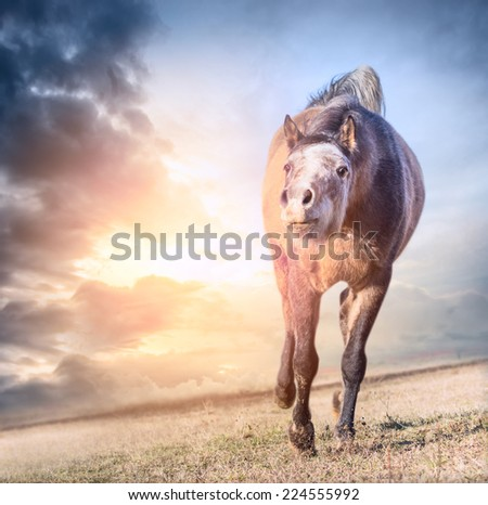playing running horse in sun at dawn sky background, soft focus - stock photo