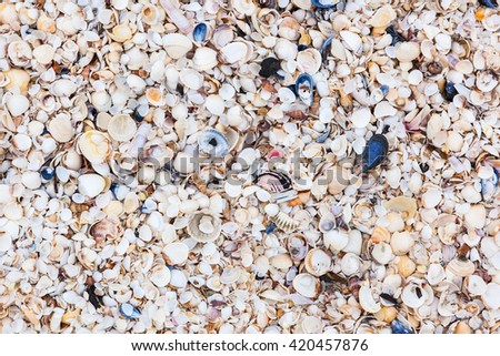 Plenty of seashell on a beach by the sea