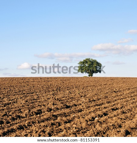 Ploughed Farmland with a Single Oak Tree in the Distance - stock photo