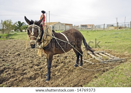 Ploughing the land in an old fashioned way in Portugal