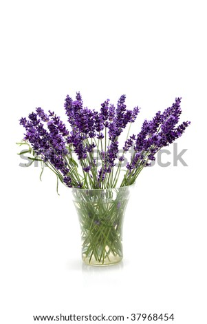 plucked lavender flowers in glass vase isolated on white background