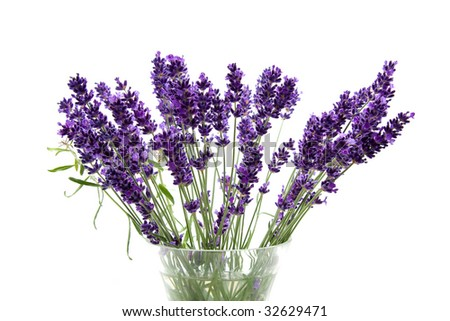 Plucked lavender in glass vase over white background