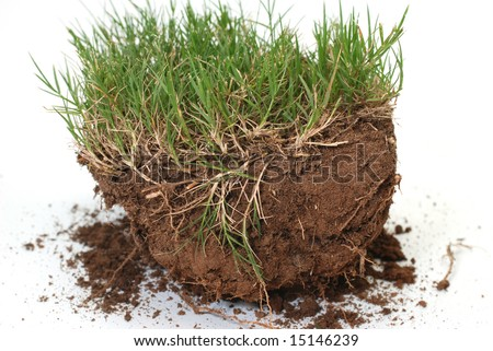 Plug of grass and dirt isolated on white background. - stock photo