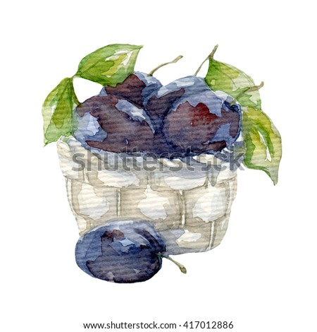Plum drawing watercolor isolated on white - stock photo