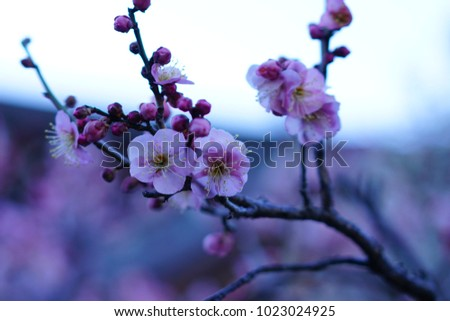 https://thumb9.shutterstock.com/display_pic_with_logo/167494286/1023024925/stock-photo-plum-in-a-shrine-1023024925.jpg
