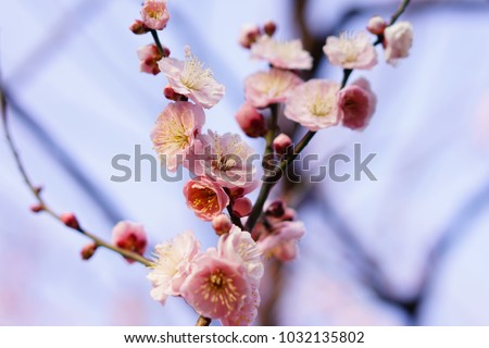 https://thumb9.shutterstock.com/display_pic_with_logo/167494286/1032135802/stock-photo-plum-in-japanese-shrine-1032135802.jpg