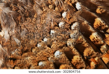 plumage background of bird closeup - stock photo