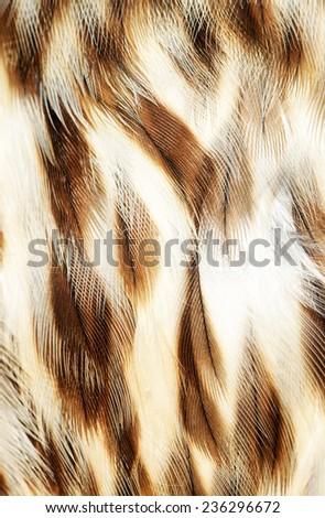 plumage background of Eagle closeup - stock photo
