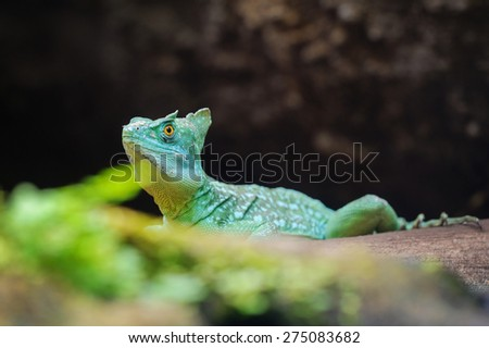 Plumed basilisk on tree trunk behind green leaves - stock photo