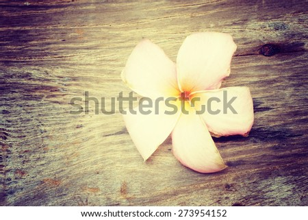 Plumeria falled on wood , cross processing style - stock photo