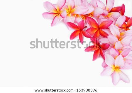 Plumeria flower for border - stock photo