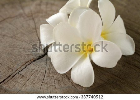 Plumeria flower on old wood floor. - stock photo