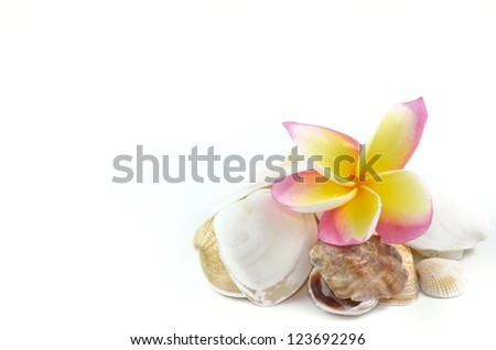 Plumeria flowers and sea shells isolated on white - stock photo