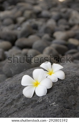 Plumeria flowers on the dark grey stone. Relax and spa treatment symbol - stock photo