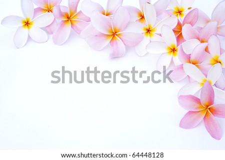 Plumeria for border - stock photo