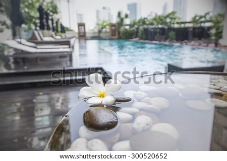 Plumeria rubra drop near swimming pool in tropical resort as city background. - stock photo