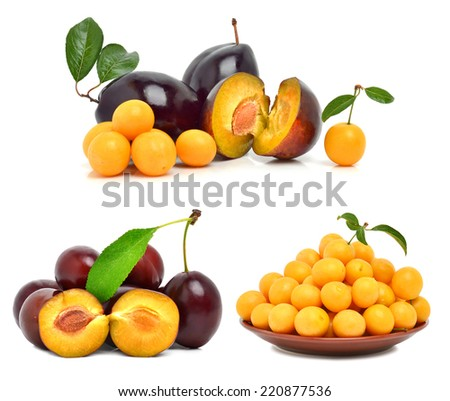 Plums and cherry plums isolated on white. Collage - stock photo