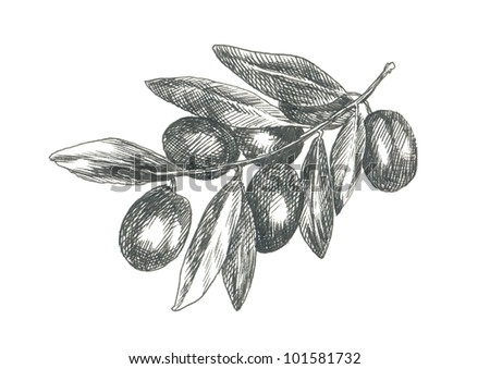 PLUMS. Picture of fruit / vegetables. (This is the original artwork - black marker pen with a hard tip.) - stock photo