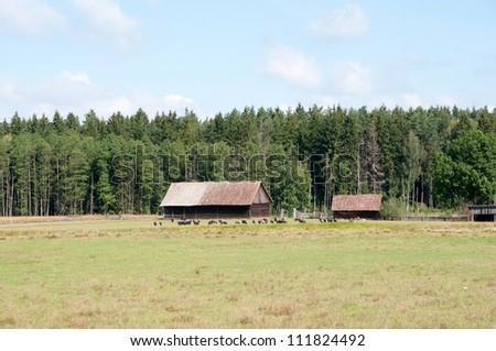 podlasie farm - stock photo