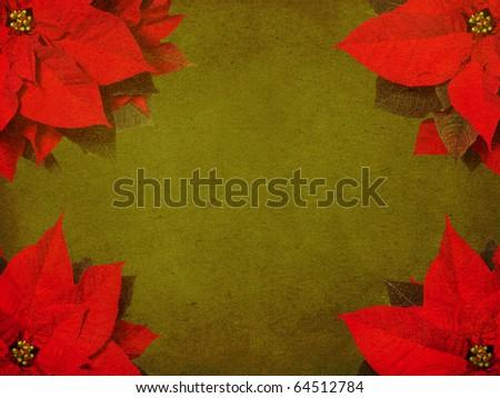 Poinsettia background - stock photo