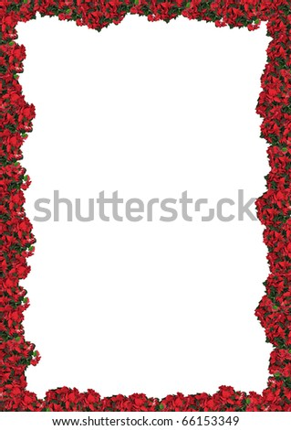 poinsettia - floral frame, background for your text or picture - stock photo