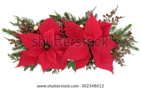 Poinsettia flower display with holly, winter greenery and gold bauble decorations over white background. - stock photo