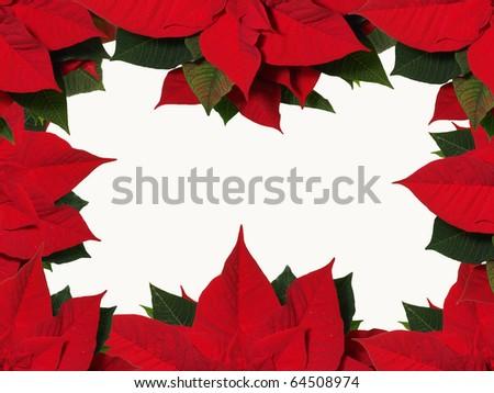 Poinsettia frame - stock photo