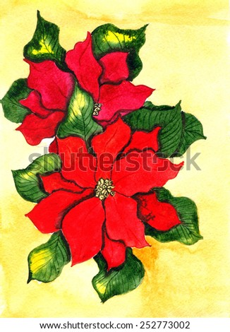 Poinsettia. Hand drawn watercolor painting - stock photo