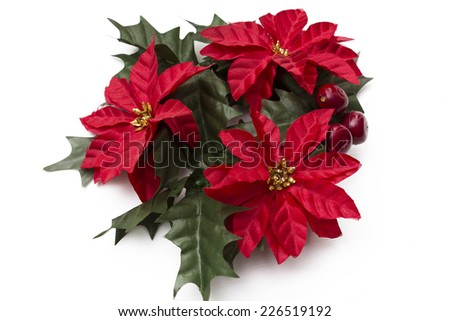 poinsettia isolated