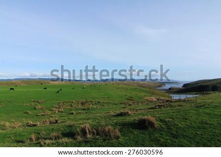 point reyes state farm - stock photo