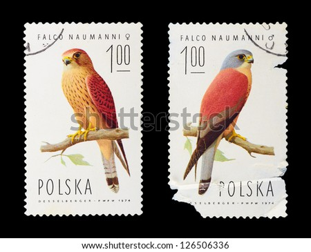 POLAND - CIRCA 1974: A set of postage stamps printed in POLAND shows parrots, series, circa 1974 - stock photo