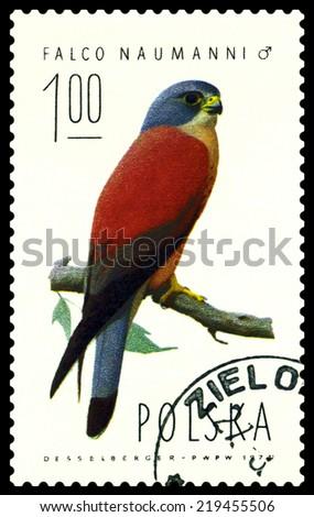 POLAND  - CIRCA 1974 : A stamp printed by Poland shows bird an Falcon  Naumanni  from the series  Falcons, birds of Prey, circa 1974 - stock photo