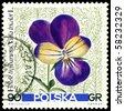 POLAND - CIRCA 1967: a stamp printed in Poland shows flower  Viola trikolor, circa 1967 - stock photo