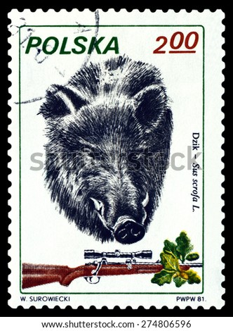 POLAND - CIRCA 1981: A Stamp printed in Poland shows image   Boar,  series Trophies, circa 1981. - stock photo