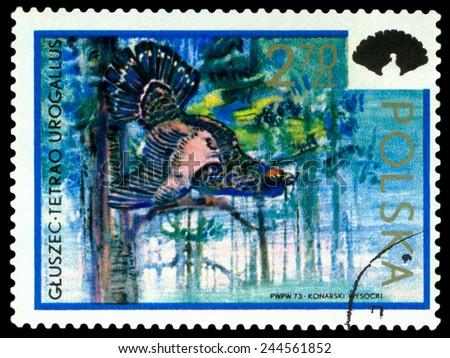 POLAND - CIRCA 1973: A Stamp printed in Poland shows image  Capercaillie,  series, circa 1973  - stock photo