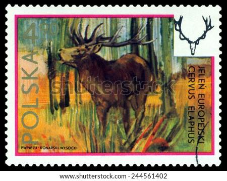 POLAND - CIRCA 1973: A Stamp printed in Poland shows image  European hart,  series, circa 1973  - stock photo