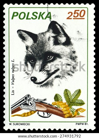 POLAND - CIRCA 1981: A Stamp printed in Poland shows image  Fox,  series Trophies, circa 1981. - stock photo