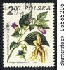 POLAND - CIRCA 1980: A stamp printed in POLAND shows image of a Atropa belladonna, herb series, circa 1980 - stock photo
